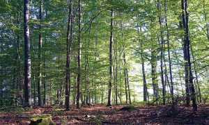 bosco malinconico